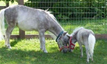 Scout the miniature horse has a lot of love for his rescue mom Victoria Brazell