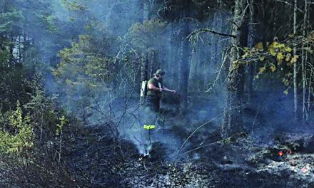Fire breaks out in forest