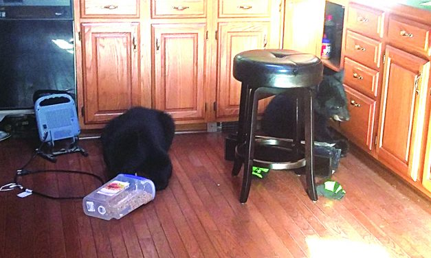 3 bears euthanized after breaking into local home