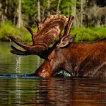Wildlife photography workshop at library
