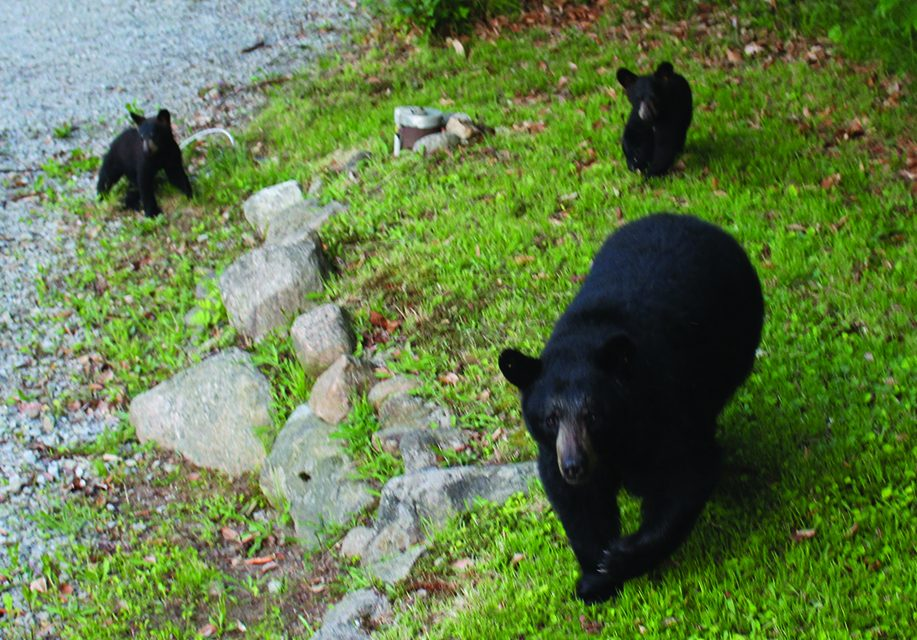 For bear's sake — avoid  interacting with them